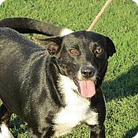 Adopt A Pet :: Danielle - Allentown, PA