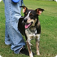 Adopt A Pet :: Odie - Franklin, TN