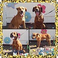 Adopt A Pet :: Kenja - Palmetto Bay, FL