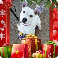 Adopt A Pet :: Genevieve - Hartsville, TN