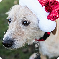 Adopt A Pet :: Biscuit - Oceanside, CA