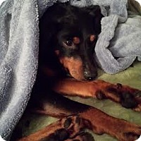 Adopt A Pet :: Scooby - Marietta, GA