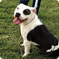 Adopt A Pet :: Luna - Santa Ana, CA