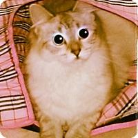 Adopt A Pet :: Bonnie - Oakland Park, FL