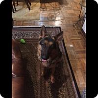 Adopt A Pet :: Wesson - Houston, TX