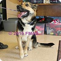 Adopt A Pet :: Rome 2500/AC11 - Madera, CA