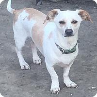 Adopt A Pet :: Nelson - McKinney, TX