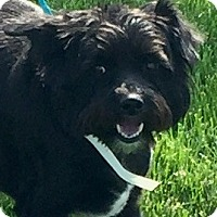 Adopt A Pet :: Coby - Oswego, IL