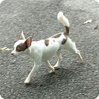 Adopt A Pet :: banjo - Gainesville, GA