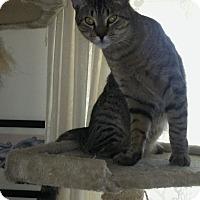 Adopt A Pet :: Leo - Myrtle Beach, SC