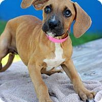 Adopt A Pet :: Valerie - Waldorf, MD