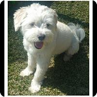 Adopt A Pet :: MAXX - Winchester, CA