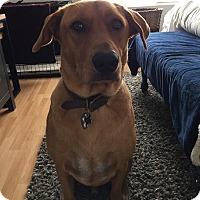 Adopt A Pet :: Kane - Chandler, AZ