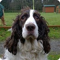 Adopt A Pet :: Mocha - Seattle c/o Kingston 98346/ Washington State, WA
