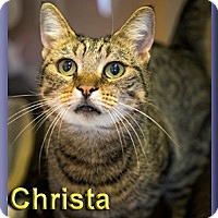 Adopt A Pet :: Christa - Aldie, VA