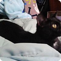 Adopt A Pet :: Ember - Warrenton, MO