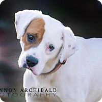 Adopt A Pet :: Lewis-ADOPTED - Springfield, MA