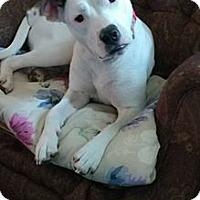 Adopt A Pet :: Lucy in Richmond, VA - Richmond, VA