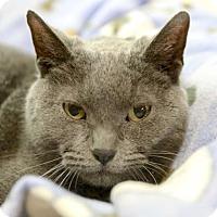Adopt A Pet :: Walnut - Kettering, OH
