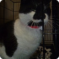 Adopt A Pet :: Eartha Kitty - Hamburg, NY