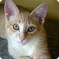 Adopt A Pet :: Trevie - Chicago, IL