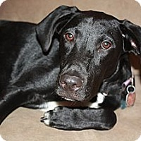 Adopt A Pet :: Chase - Richmond, VA