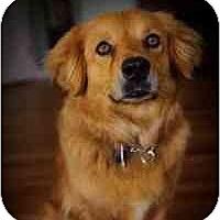 Adopt A Pet :: Mitzi - Scottsdale, AZ
