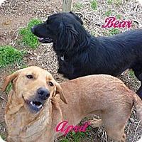Adopt A Pet :: April - Linden, TN
