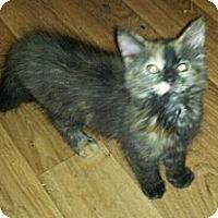 Adopt A Pet :: Reena - Catasauqua, PA