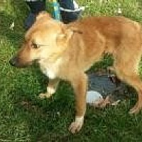 Adopt A Pet :: ethel - Prestonsburg, KY