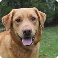 Adopt A Pet :: Conroy - Cincinnati, OH