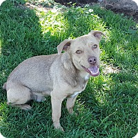 Adopt A Pet :: Brody - Sensitive & Loving - Bend, OR