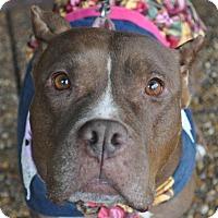 Adopt A Pet :: Annie - Atlanta, GA