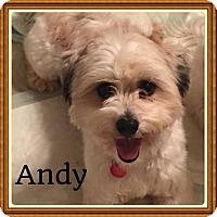 Adopt A Pet :: Andy and Amos - LEXINGTON, KY