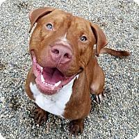 Adopt A Pet :: Zack - Bloomington, IL
