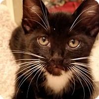 Adopt A Pet :: Sylvester - Buford, GA
