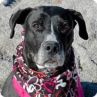 Adopt A Pet :: Blitzen - Delaware, OH