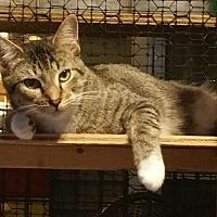 Adopt A Pet :: Neal - Columbia, SC