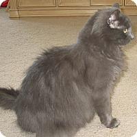 Adopt A Pet :: Bella  Boo - Trevose, PA