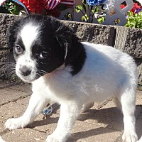 Adopt A Pet :: Farrow - West Chicago, IL