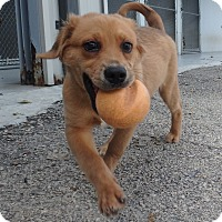 Adopt A Pet :: O'Malley - Seguin, TX