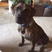 Adopt A Pet :: DOLLAR - Albany, NY