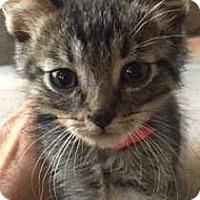 Adopt A Pet :: Ed - Denver, CO