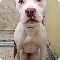 Adopt A Pet :: ADOPTED!!!   Aubrey - Plainfield, IL