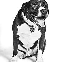 Adopt A Pet :: Keegan - Van Nuys, CA