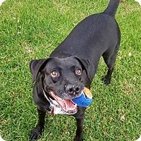 Adopt A Pet :: Italia - San Diego, CA