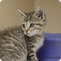 Adopt A Pet :: Reba - Lincolnton, NC