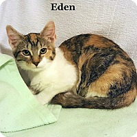 Adopt A Pet :: Eden 2 - Bentonville, AR