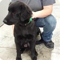 Adopt A Pet :: Fulmer - Paducah, KY