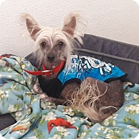 Adopt A Pet :: Billy - Scottsdale, AZ